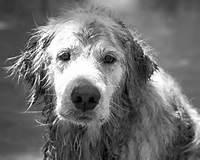 wet-dog